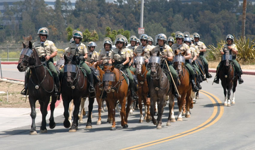 Mounted Enforcement Training